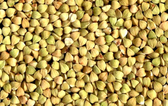 buckwheat.jpg
